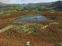 Lily Tarn, Loughrigg