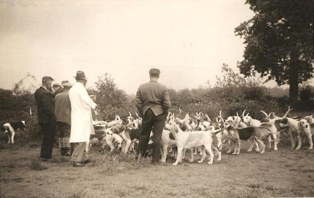 Coniston Foxhounds